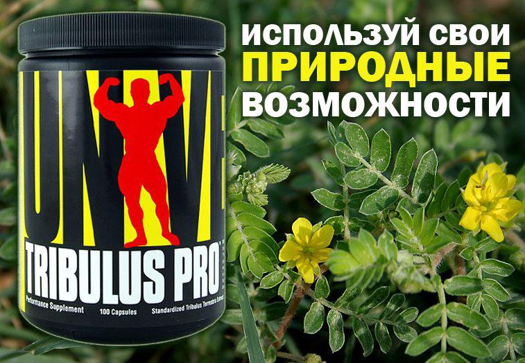 Tribulus Pro – естественный и эффективный бустер тестостерона